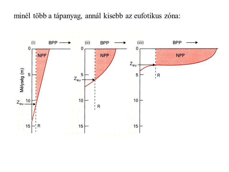 minél több a tápanyag, annál kisebb az eufotikus zóna: