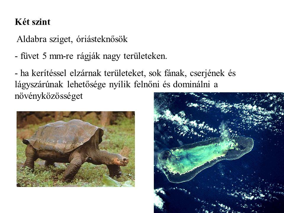 Két szint Aldabra sziget, óriásteknősök. füvet 5 mm-re rágják nagy területeken.