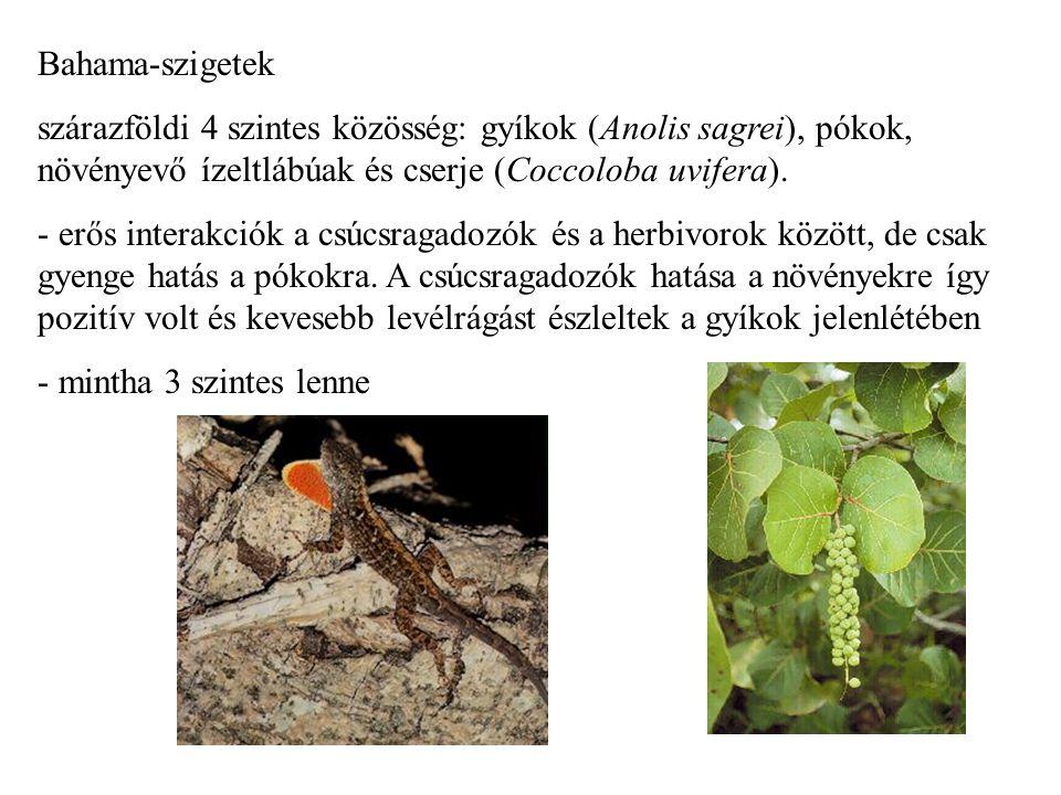 Bahama-szigetek szárazföldi 4 szintes közösség: gyíkok (Anolis sagrei), pókok, növényevő ízeltlábúak és cserje (Coccoloba uvifera).