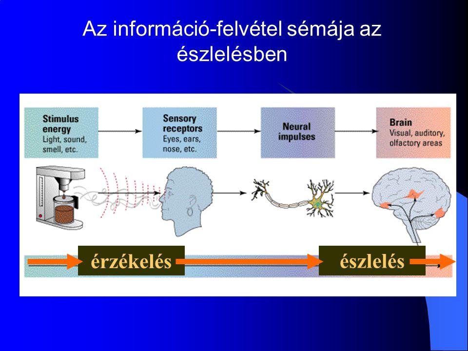 Az információ-felvétel sémája az észlelésben