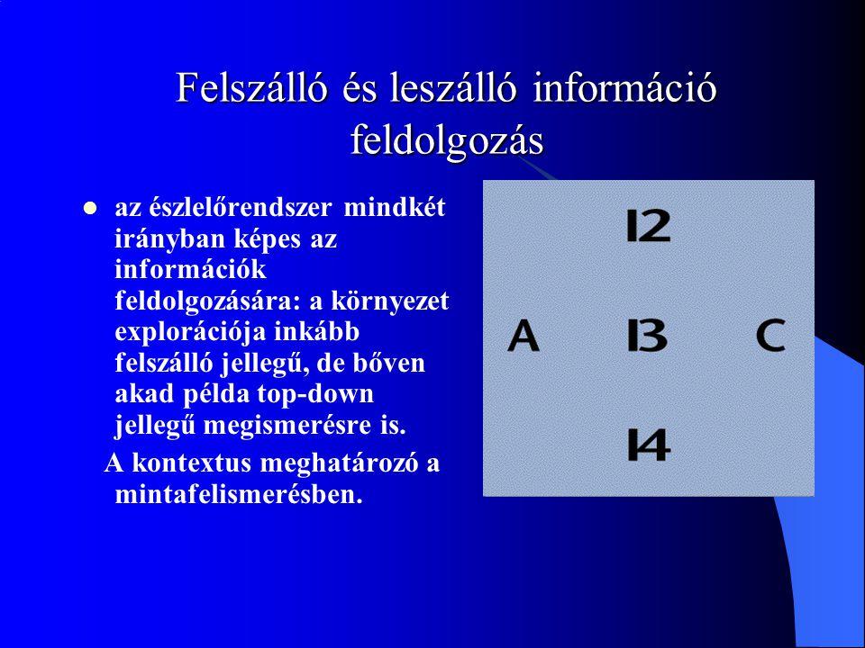 Felszálló és leszálló információ feldolgozás