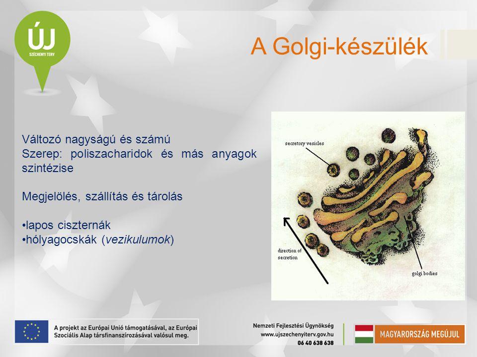 A Golgi-készülék Változó nagyságú és számú