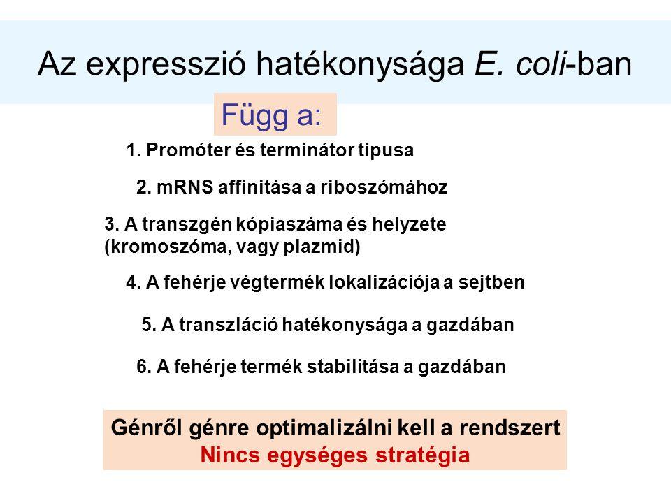 Az expresszió hatékonysága E. coli-ban