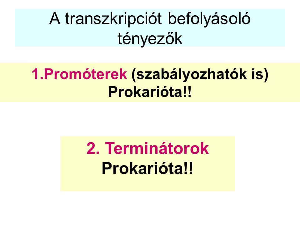 A transzkripciót befolyásoló tényezők