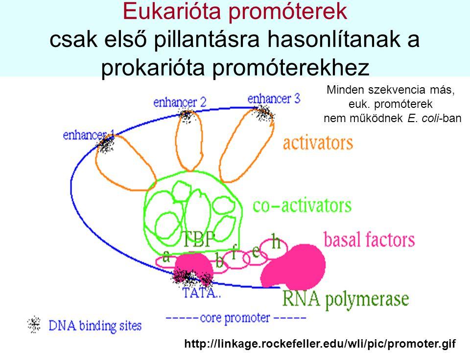 nem működnek E. coli-ban