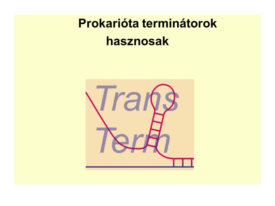 Prokarióta terminátorok