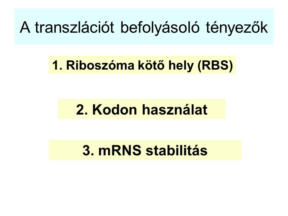 A transzlációt befolyásoló tényezők