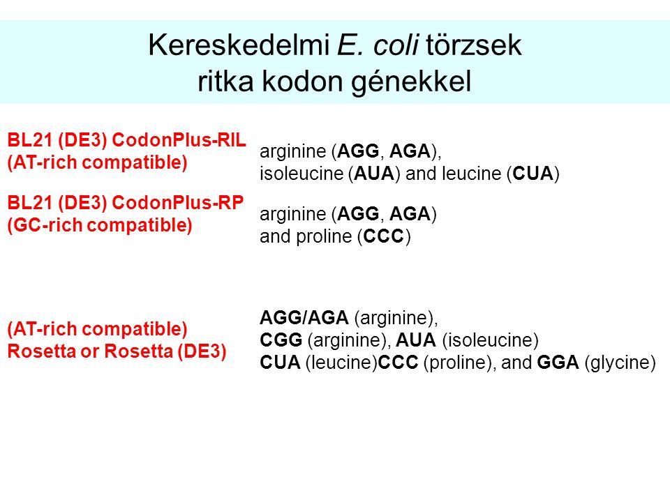 Kereskedelmi E. coli törzsek ritka kodon génekkel