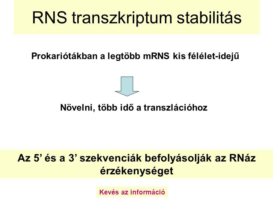 RNS transzkriptum stabilitás