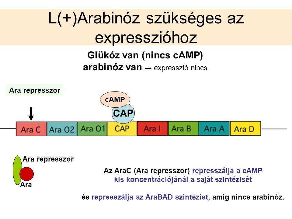 L(+)Arabinóz szükséges az expresszióhoz