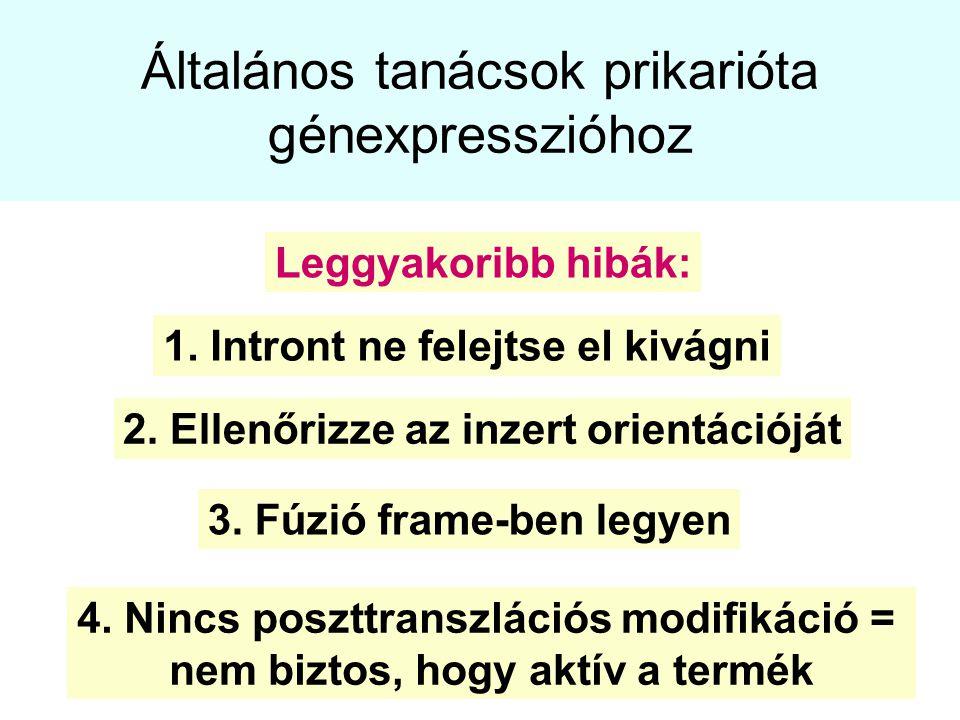 Általános tanácsok prikarióta génexpresszióhoz
