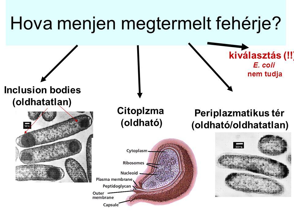 Hova menjen megtermelt fehérje