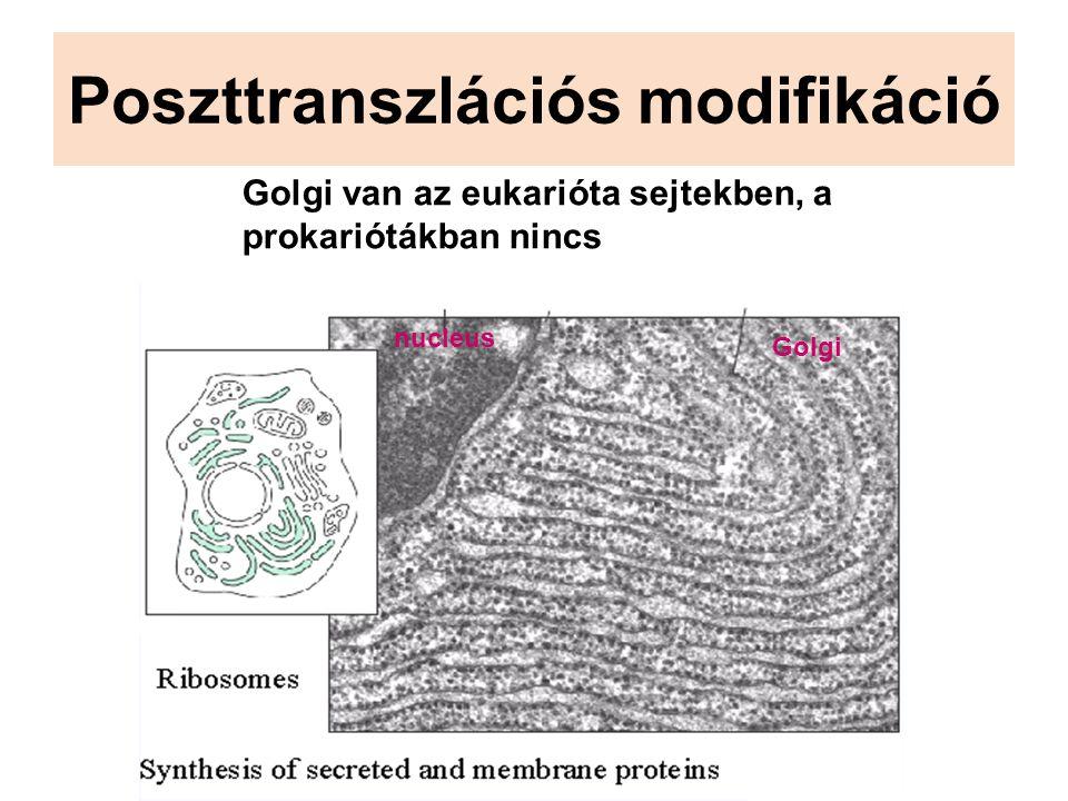 Poszttranszlációs modifikáció