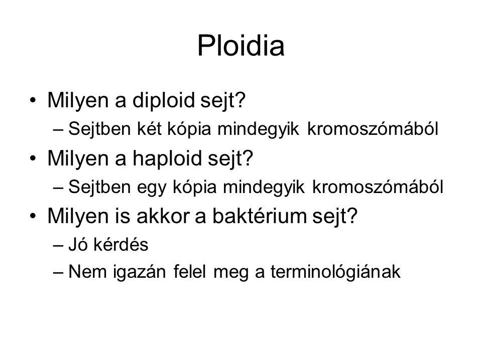 Ploidia Milyen a diploid sejt Milyen a haploid sejt