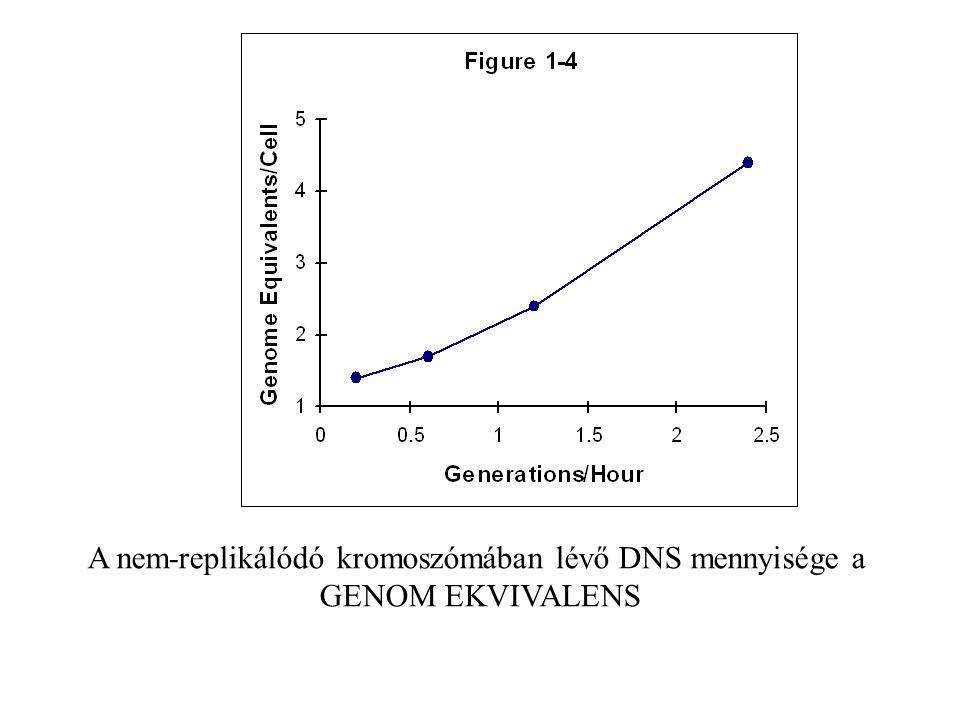 A nem-replikálódó kromoszómában lévő DNS mennyisége a