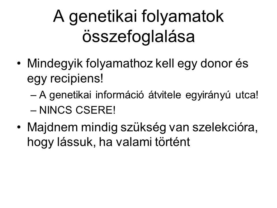 A genetikai folyamatok összefoglalása