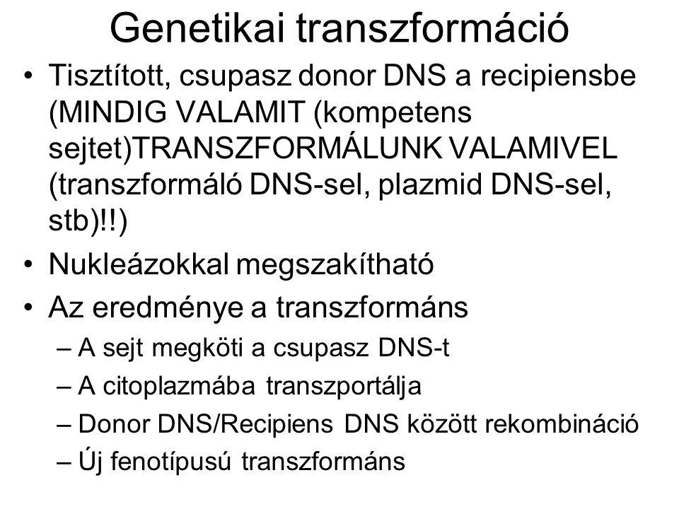 Genetikai transzformáció