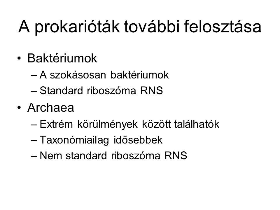 A prokarióták további felosztása