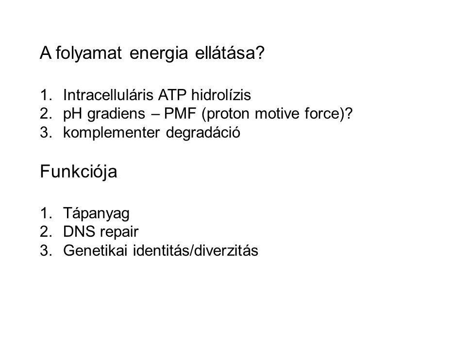A folyamat energia ellátása