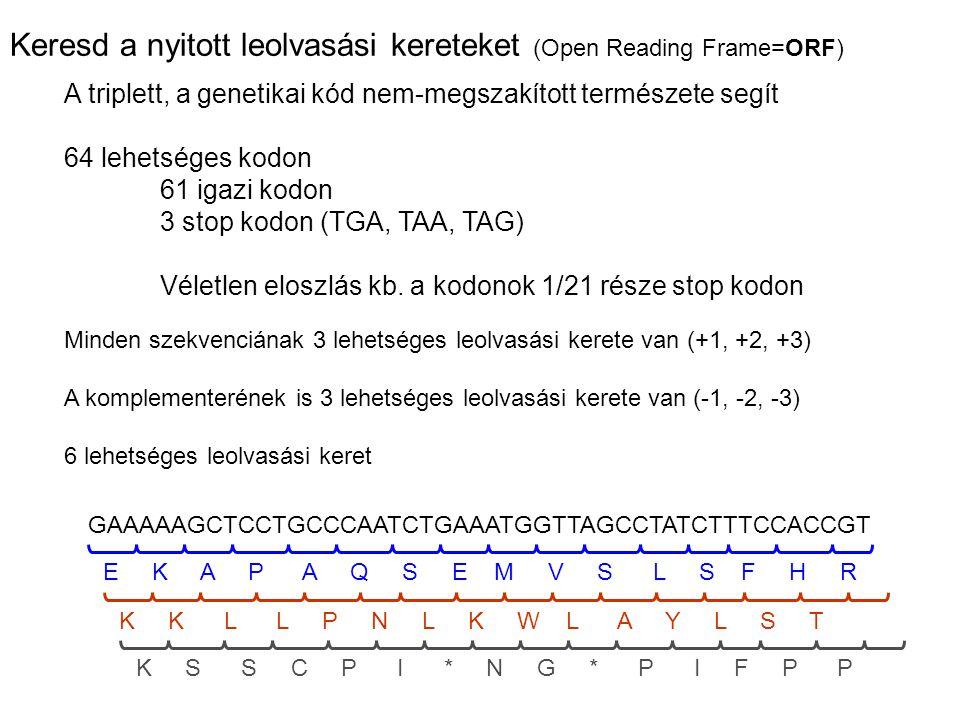 Keresd a nyitott leolvasási kereteket (Open Reading Frame=ORF)