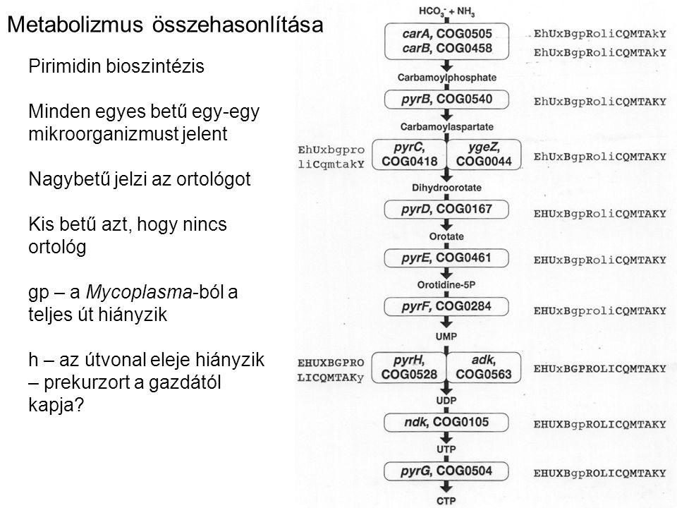 Metabolizmus összehasonlítása