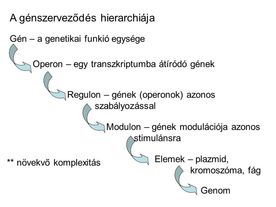 A génszerveződés hierarchiája