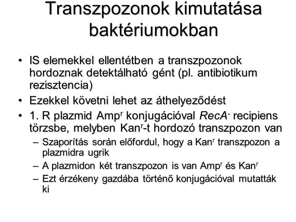 Transzpozonok kimutatása baktériumokban