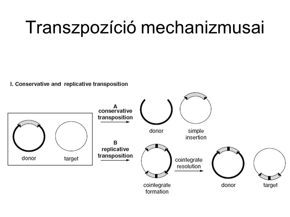Transzpozíció mechanizmusai