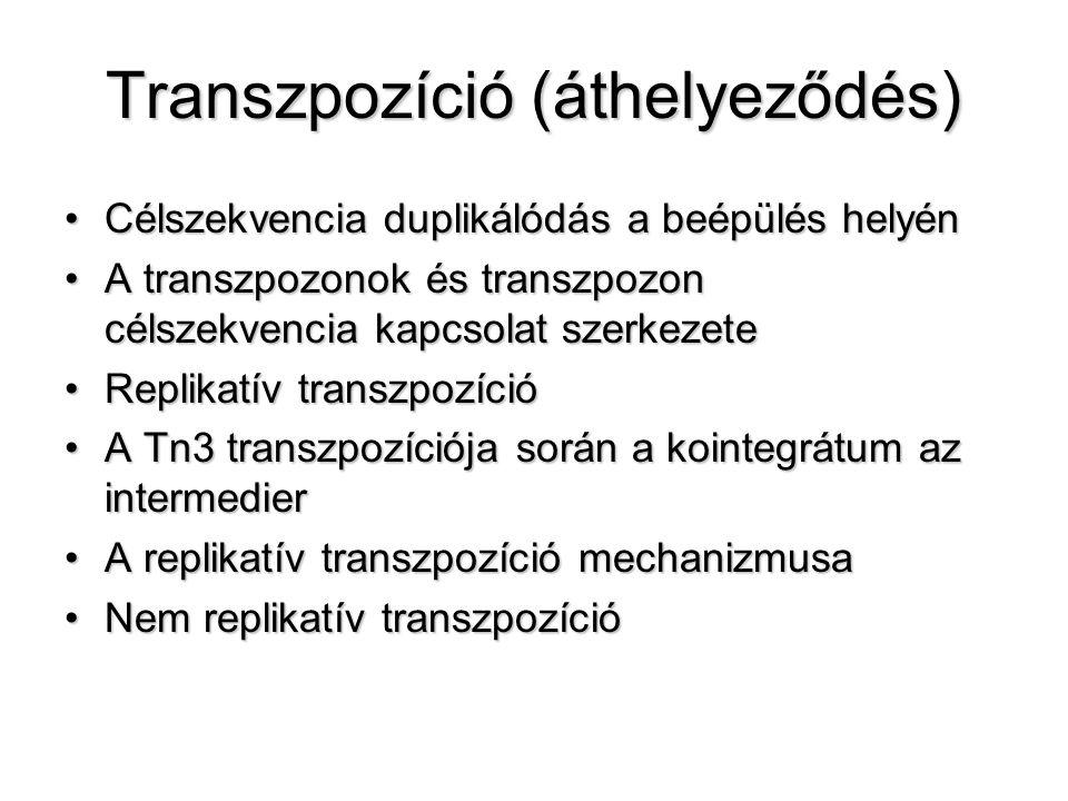 Transzpozíció (áthelyeződés)