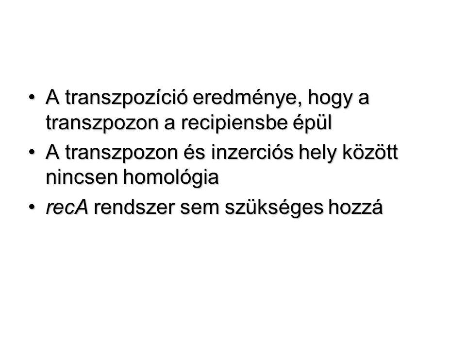 A transzpozíció eredménye, hogy a transzpozon a recipiensbe épül