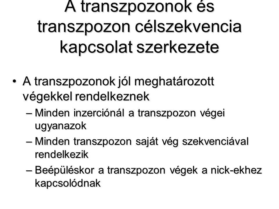 A transzpozonok és transzpozon célszekvencia kapcsolat szerkezete