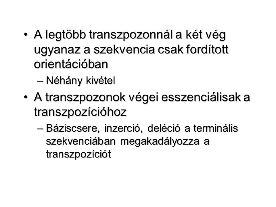 A transzpozonok végei esszenciálisak a transzpozícióhoz