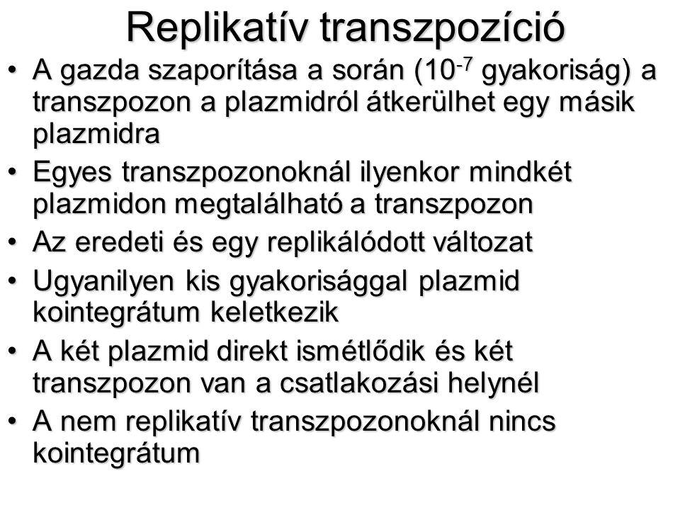Replikatív transzpozíció
