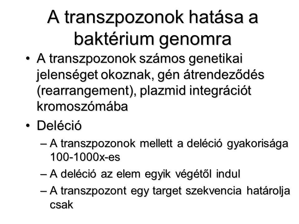 A transzpozonok hatása a baktérium genomra