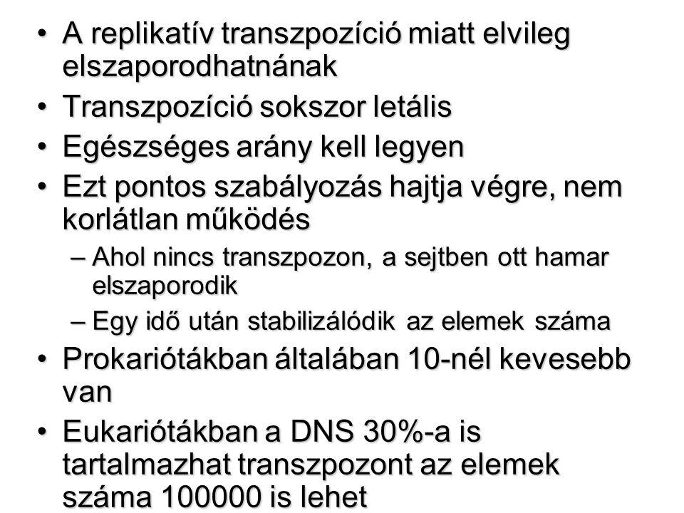 A replikatív transzpozíció miatt elvileg elszaporodhatnának