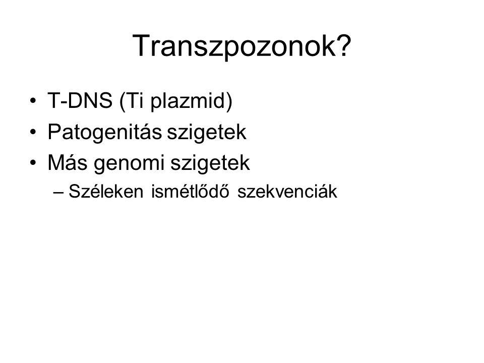 Transzpozonok T-DNS (Ti plazmid) Patogenitás szigetek