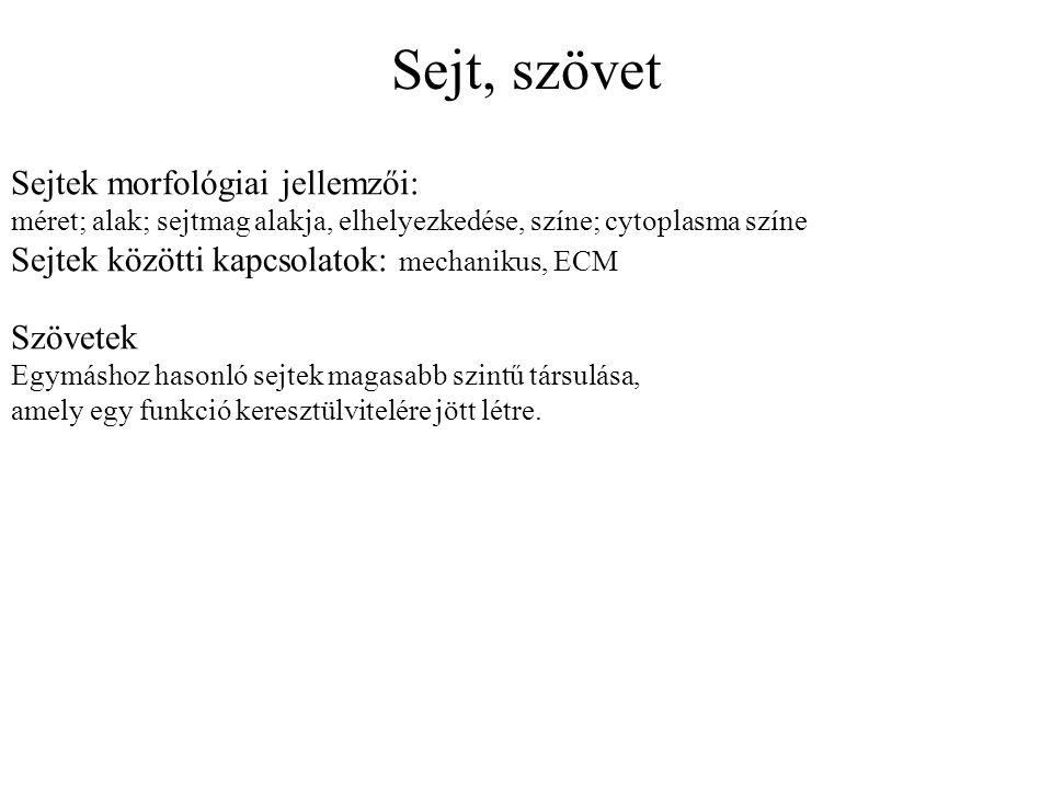 Sejt, szövet Sejtek morfológiai jellemzői: