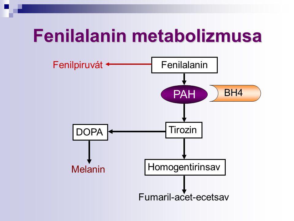 Fenilalanin metabolizmusa