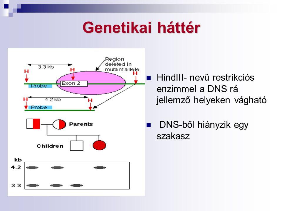 Genetikai háttér HindIII- nevű restrikciós enzimmel a DNS rá jellemző helyeken vágható.