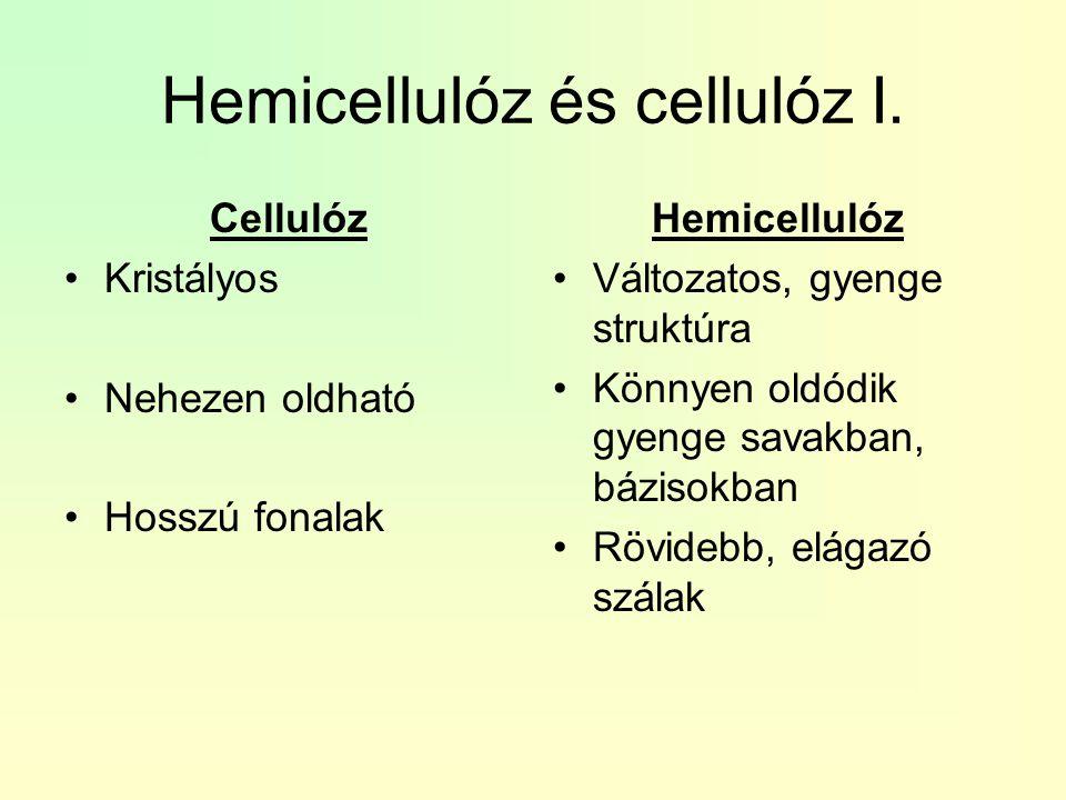 Hemicellulóz és cellulóz I.