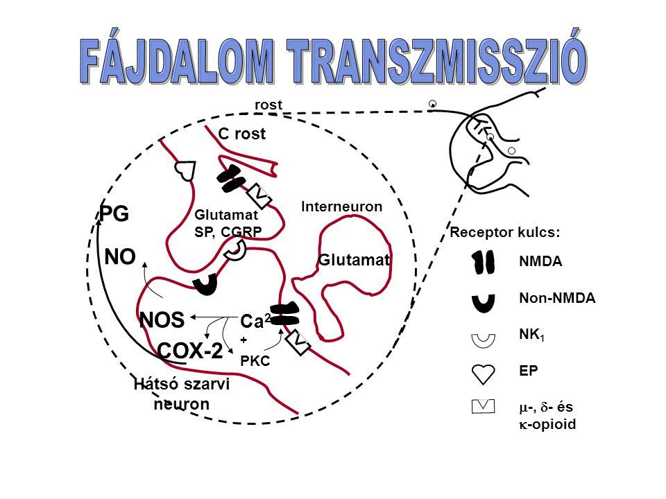 FÁJDALOM TRANSZMISSZIÓ