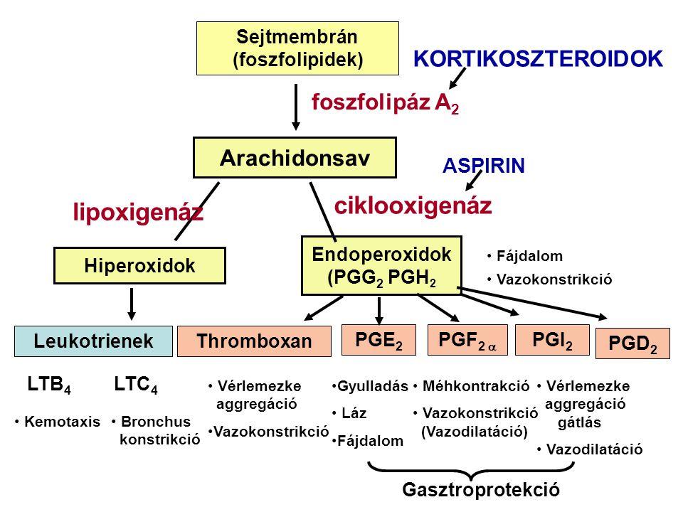 Sejtmembrán (foszfolipidek) Endoperoxidok (PGG2 PGH2