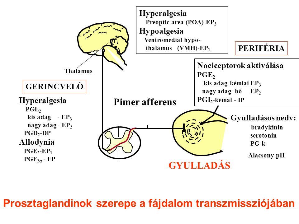 Prosztaglandinok szerepe a fájdalom transzmissziójában