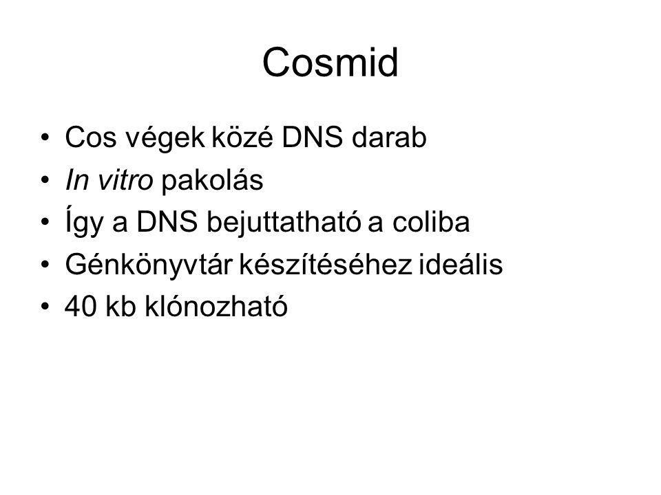 Cosmid Cos végek közé DNS darab In vitro pakolás