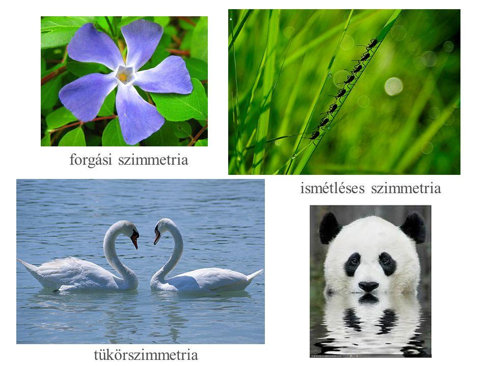 forgási szimmetria ismétléses szimmetria tükörszimmetria