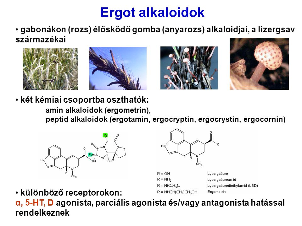 Ergot alkaloidok gabonákon (rozs) élősködő gomba (anyarozs) alkaloidjai, a lizergsav származékai.