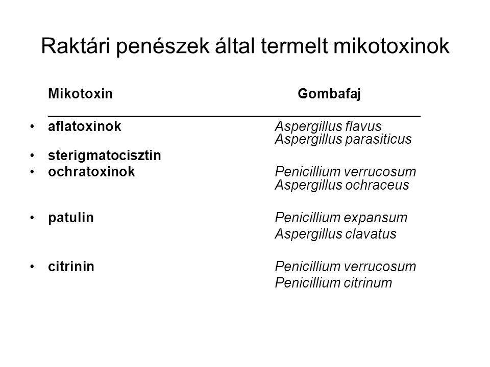 Raktári penészek által termelt mikotoxinok