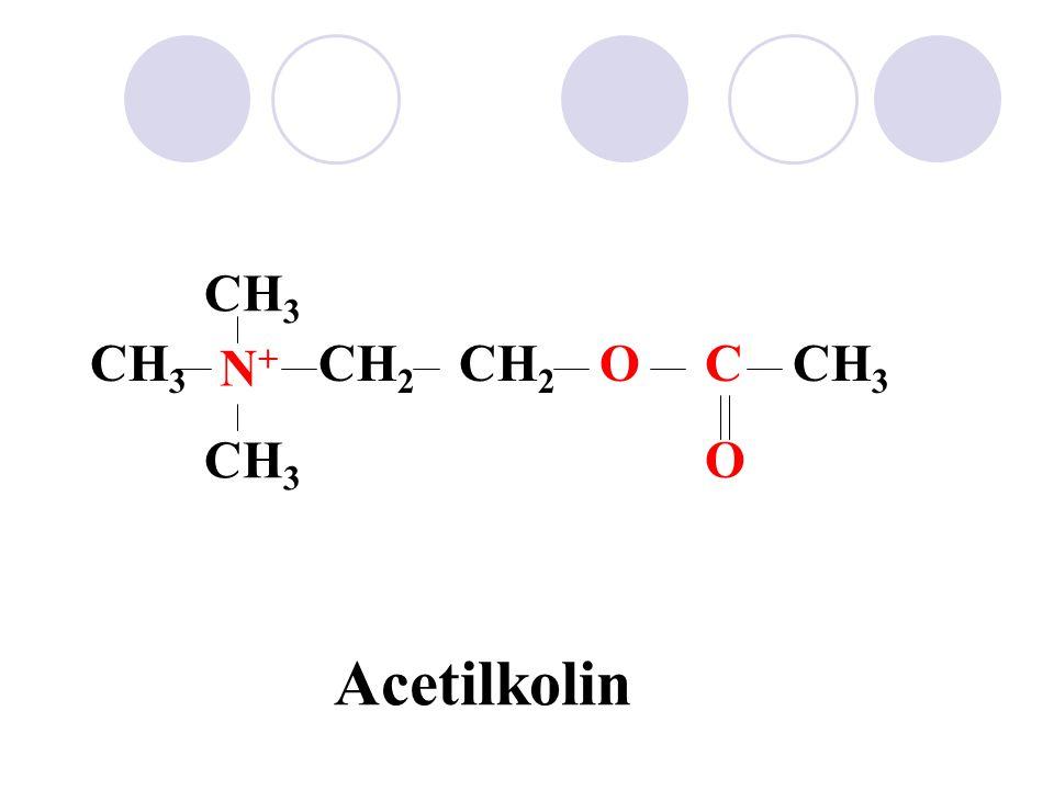 CH3 CH3 N+ CH2 CH2 O C CH3 CH3 O Acetilkolin