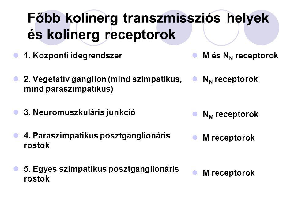 Főbb kolinerg transzmissziós helyek és kolinerg receptorok