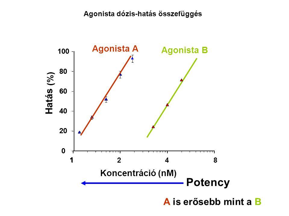Potency Hatás A is erősebb mint a B Agonista A Agonista B (%)